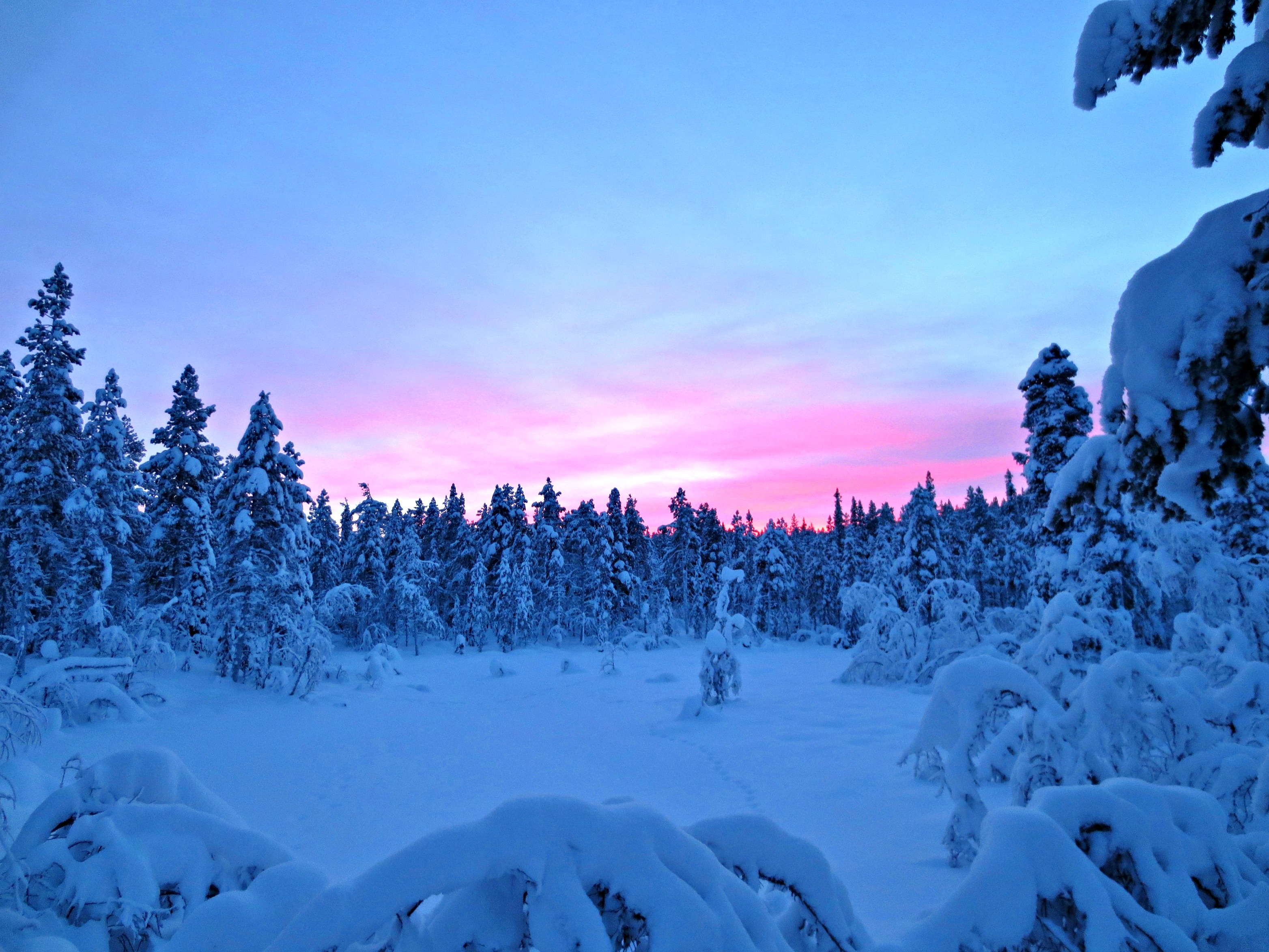 live from sweden dog sledding ice hotel snowmobiling wake and wander. Black Bedroom Furniture Sets. Home Design Ideas